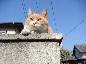 番猫 たわし