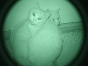 猫の浮気調査。 結果は黒でした。