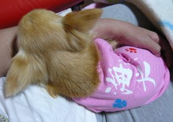 blog2011060508.jpg
