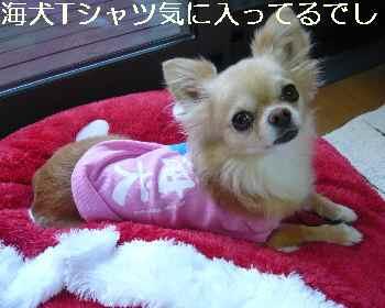 blog2011060602.jpg