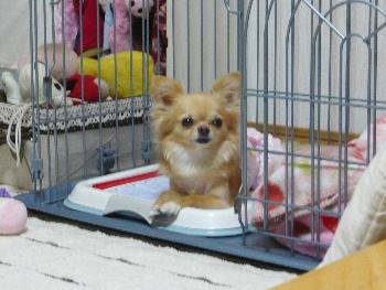 blog2011060902.jpg