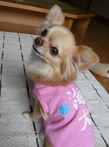 blog2011061303.jpg