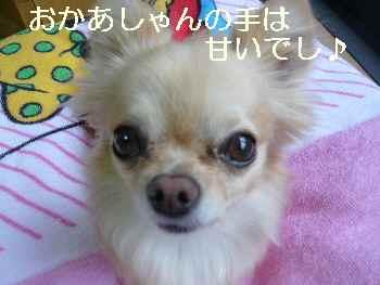 blog2011061502.jpg