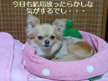 blog2011061801.jpg
