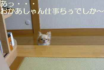 blog2011062001.jpg