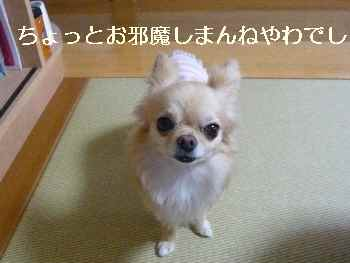 blog2011062002.jpg