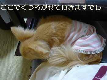 blog2011062003.jpg