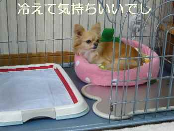 blog2011062206.jpg