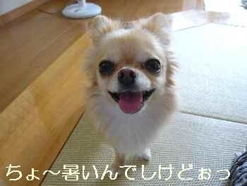 blog2011062404.jpg