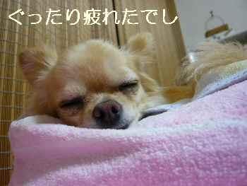 blog2011062602.jpg