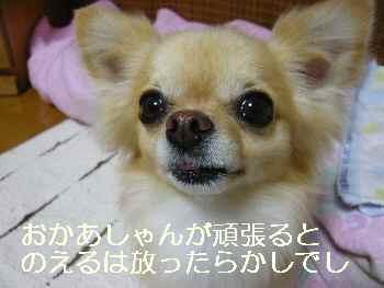 blog2011070502.jpg