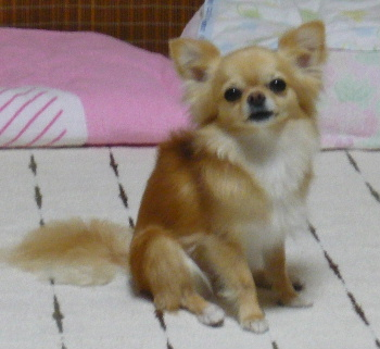 blog2011070607.jpg