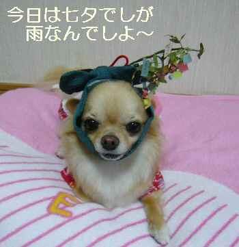 blog2011070702.jpg