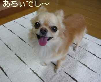 blog2011070906.jpg