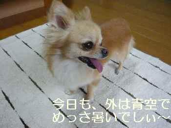 blog2011071001.jpg