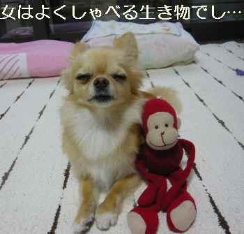 blog2011071202.jpg