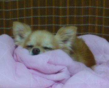 blog2011071305.jpg