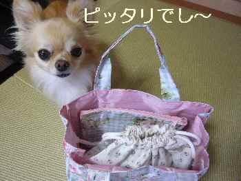 blog2011071503.jpg