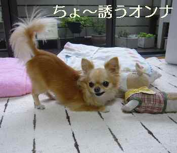 blog2011071804.jpg