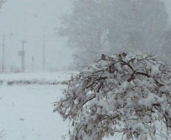 DVC大雪2