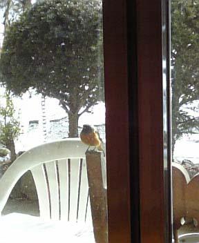 DVC鳥2