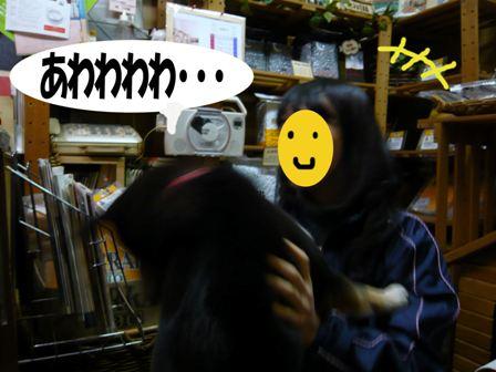 ayame11_20080211222748.jpg