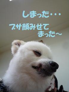 azuki110618.jpg