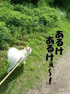 azuki110624_1.jpg