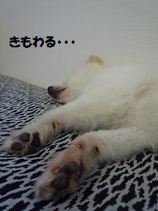 azuki110717.jpg