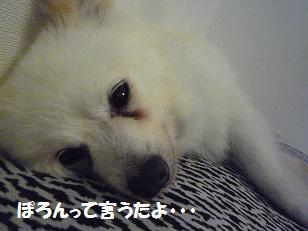 azuki110717_2.jpg