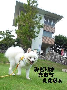 azuki110814.jpg