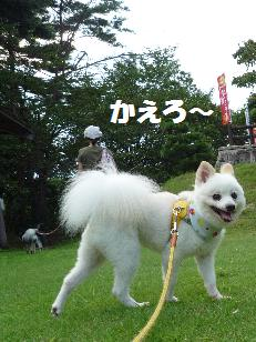 azuki110814_2.jpg