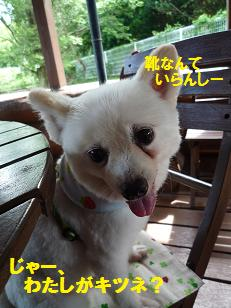 azuki110817_2.jpg