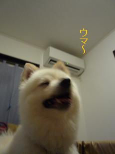 azuki110903.jpg