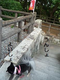chai110814_2.jpg