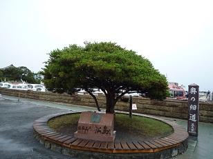 matsushima1108.jpg