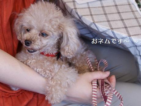 nagichan110710.jpg