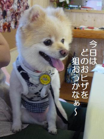 oochan110710_3.jpg