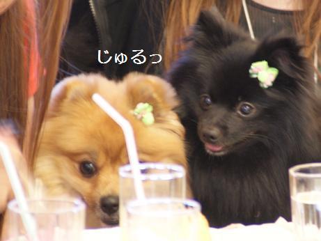 sasukekun110710.jpg