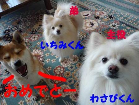 P1220481-AZUKI.jpg