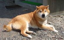 P1240018-AZUKI.jpg