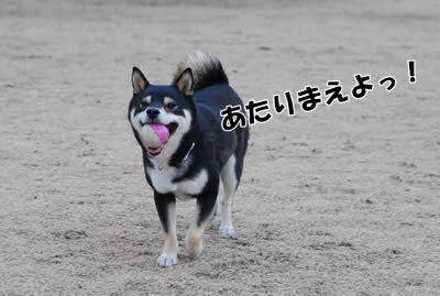 20080213_0122.jpg