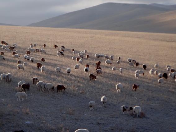 11.11.6 羊群3,-20