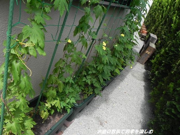 go-ya5_2013072506101135b.jpg