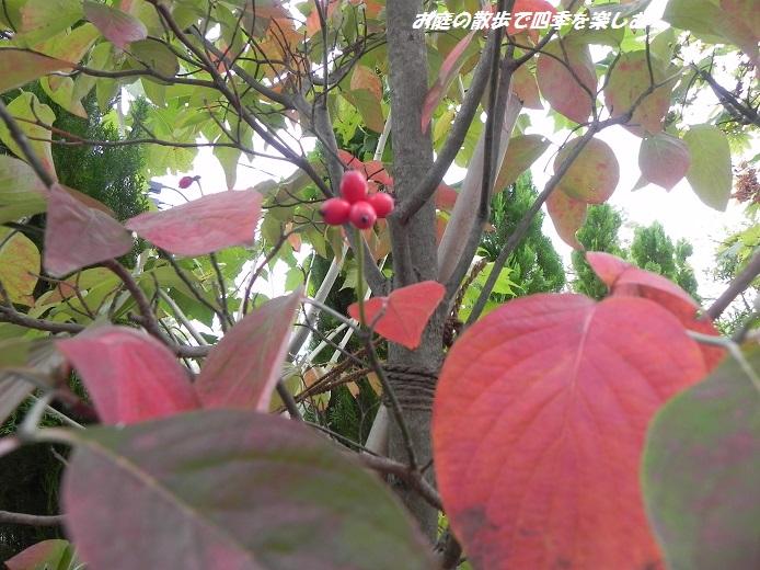 hanamizuki5_2013111001025577c.jpg