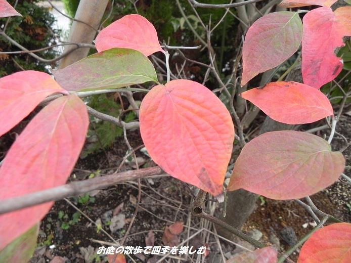 hanamizuki6_20131110010257a3c.jpg