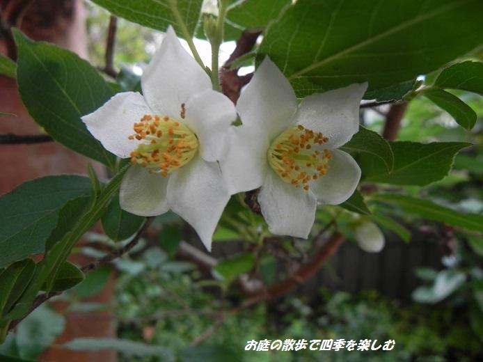 himesyara2_20130623102058.jpg
