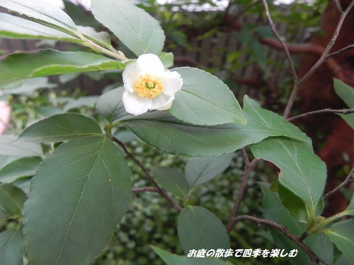 himesyara3_20130623102059.jpg