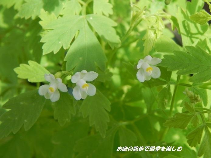 huusenkazura5_20130724194043.jpg