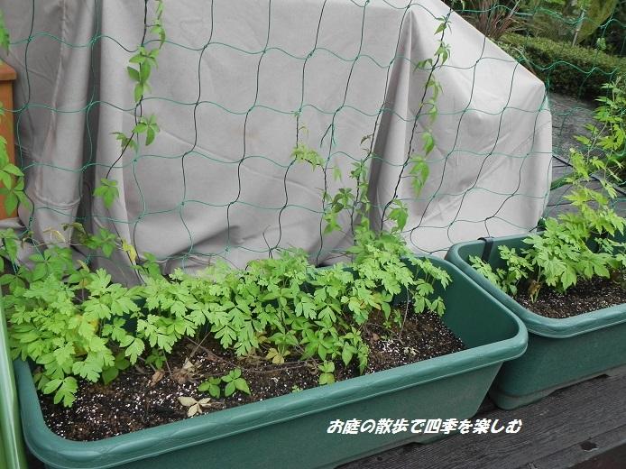 huusenkazura_20130712053813.jpg